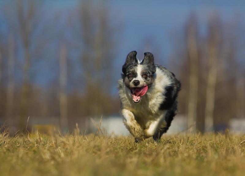 Guttrider's Dog